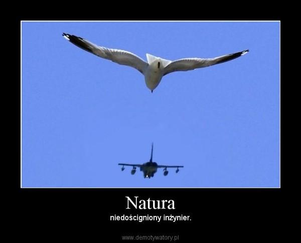 Natura – niedościgniony inżynier.