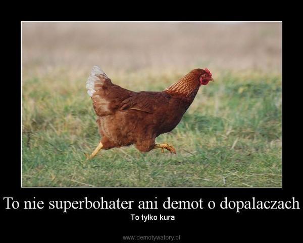 To nie superbohater ani demot o dopalaczach –  To tylko kura