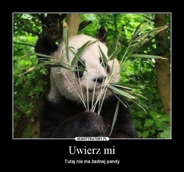 Uwierz mi – Tutaj nie ma żadnej pandy