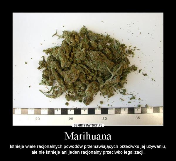 Marihuana – Istnieje wiele racjonalnych powodów przemawiających przeciwko jej używaniu, ale nie istnieje ani jeden racjonalny przeciwko legalizacji.