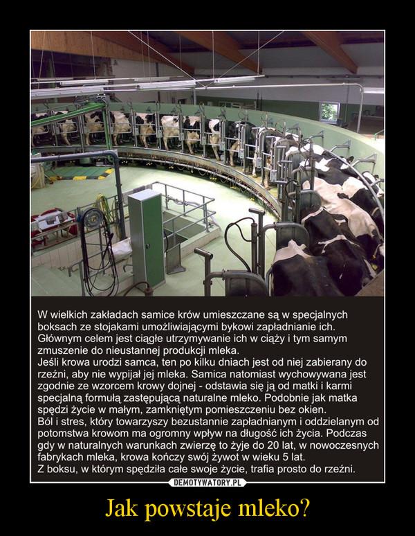 Jak powstaje mleko? –