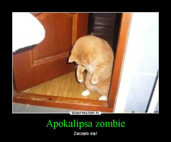 Apokalipsa zombie – Zaczęło się!