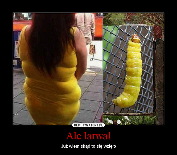 Ale larwa! – Już wiem skąd to się wzięło