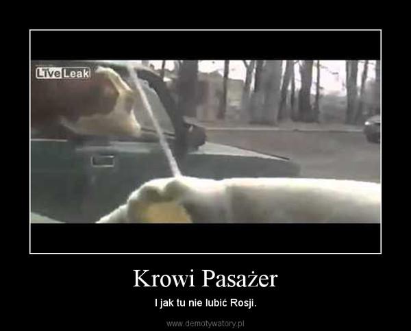 Krowi Pasażer – I jak tu nie lubić Rosji.