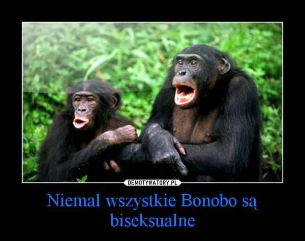 Niemal wszystkie Bonobo są biseksualne –