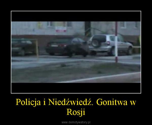 Policja i Niedźwiedź. Gonitwa w Rosji –