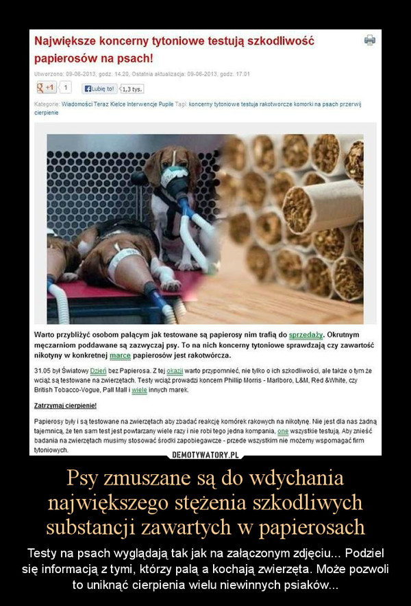 Psy zmuszane są do wdychania największego stężenia szkodliwych substancji zawartych w papierosach – Testy na psach wyglądają tak jak na załączonym zdjęciu... Podziel się informacją z tymi, którzy palą a kochają zwierzęta. Może pozwoli to uniknąć cierpienia wielu niewinnych psiaków...