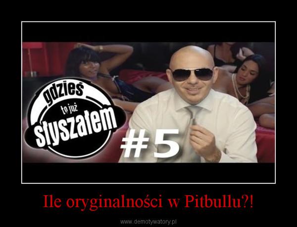 Ile oryginalności w Pitbullu?! –