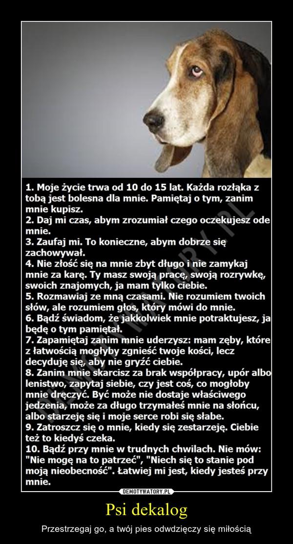Psi dekalog – Przestrzegaj go, a twój pies odwdzięczy się miłością
