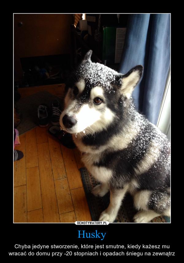 Husky – Chyba jedyne stworzenie, które jest smutne, kiedy każesz mu wracać do domu przy -20 stopniach i opadach śniegu na zewnątrz