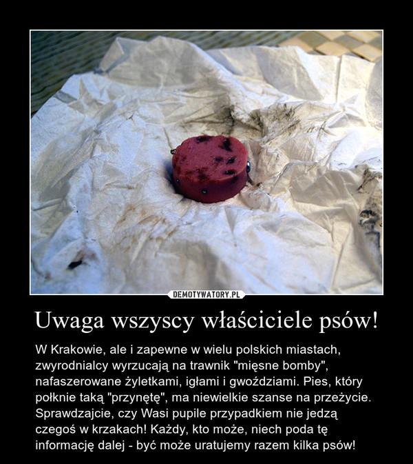 """Uwaga wszyscy właściciele psów! – W Krakowie, ale i zapewne w wielu polskich miastach, zwyrodnialcy wyrzucają na trawnik """"mięsne bomby"""", nafaszerowane żyletkami, igłami i gwoździami. Pies, który połknie taką """"przynętę"""", ma niewielkie szanse na przeżycie. Sprawdzajcie, czy Wasi pupile przypadkiem nie jedzą czegoś w krzakach! Każdy, kto może, niech poda tę informację dalej - być może uratujemy razem kilka psów!"""