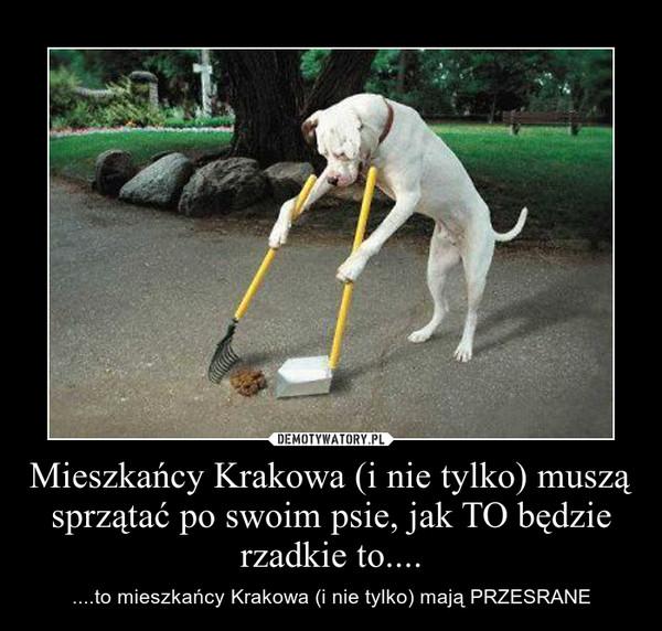 Mieszkańcy Krakowa (i nie tylko) muszą sprzątać po swoim psie, jak TO będzie rzadkie to.... – ....to mieszkańcy Krakowa (i nie tylko) mają PRZESRANE
