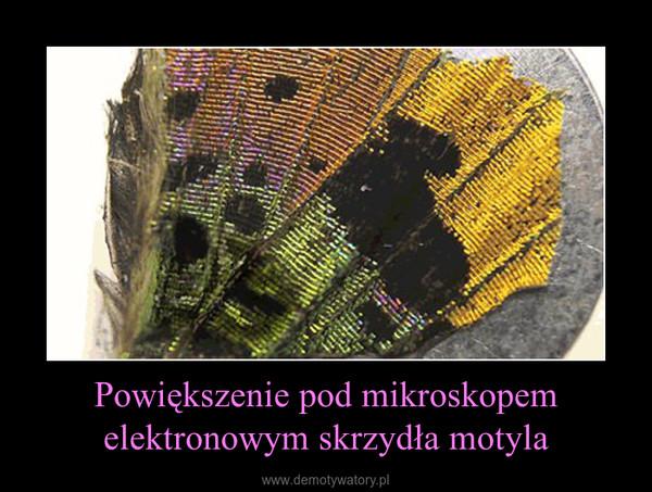 Powiększenie pod mikroskopem elektronowym skrzydła motyla –