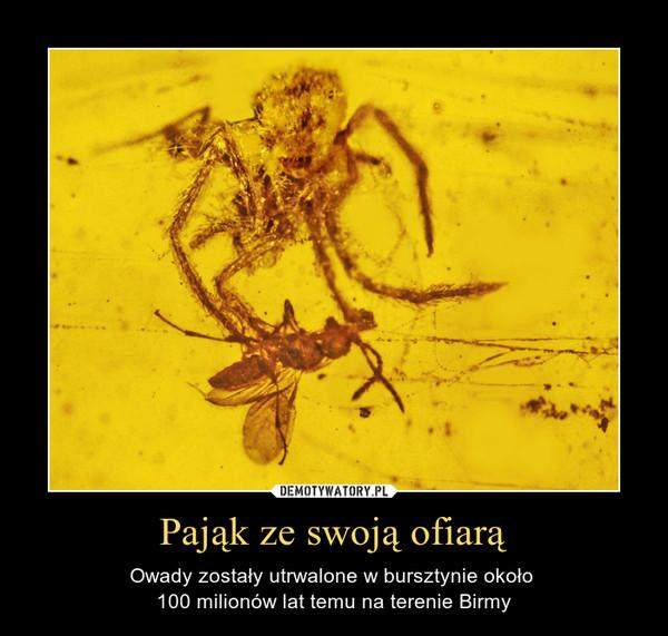 Pająk ze swoją ofiarą – Owady zostały utrwalone w bursztynie około 100 milionów lat temu na terenie Birmy