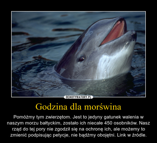 Godzina dla morświna – Pomóżmy tym zwierzętom. Jest to jedyny gatunek walenia w naszym morzu bałtyckim, zostało ich niecałe 450 osobników. Nasz rząd do tej pory nie zgodził się na ochronę ich, ale możemy to zmienić podpisując petycje, nie bądźmy obojętni. Link w źródle.