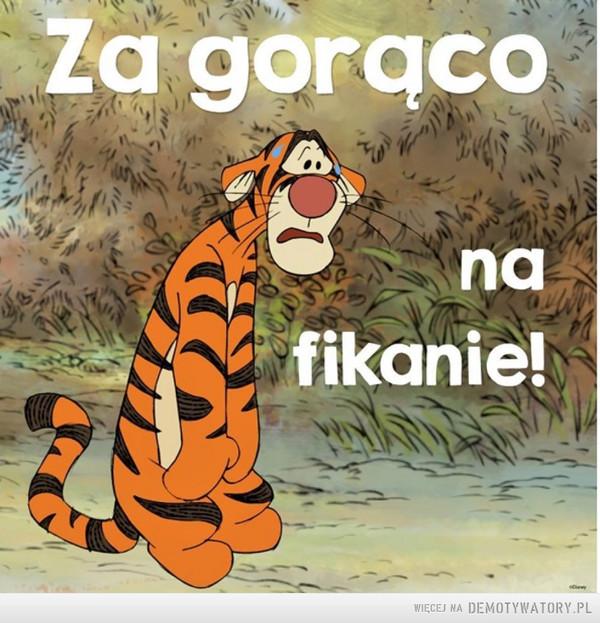 Nawet Tygrysek ma dość –