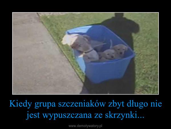 Kiedy grupa szczeniaków zbyt długo nie jest wypuszczana ze skrzynki... –