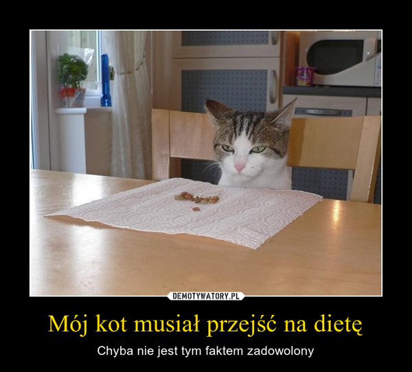 Mój kot musiał przejść na dietę – Chyba nie jest tym faktem zadowolony