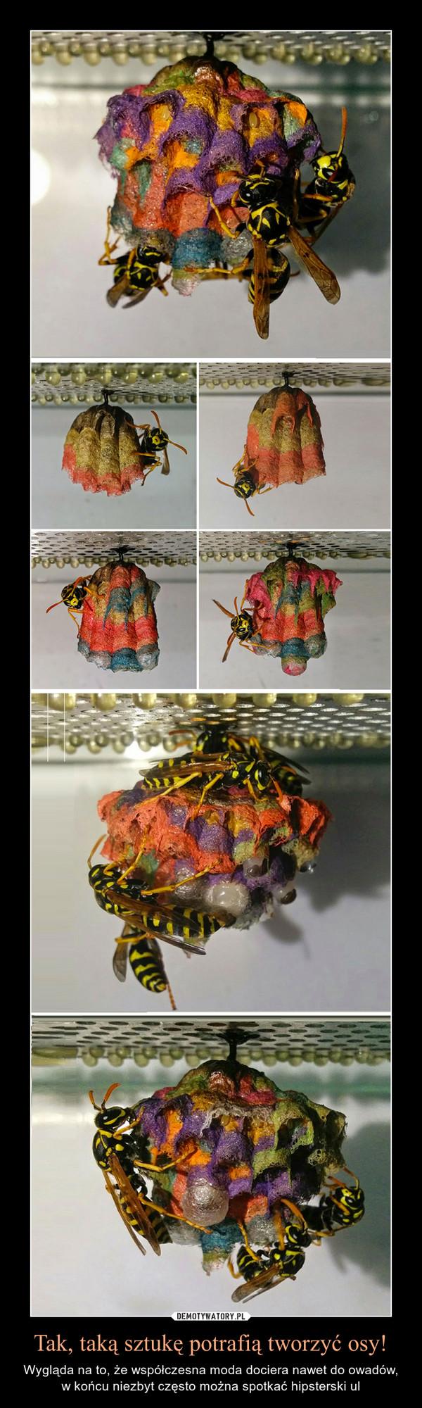 Tak, taką sztukę potrafią tworzyć osy! – Wygląda na to, że współczesna moda dociera nawet do owadów, w końcu niezbyt często można spotkać hipsterski ul