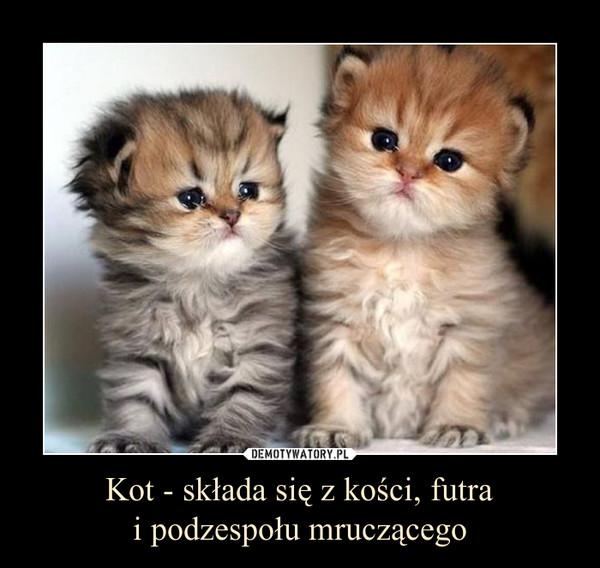 Kot - składa się z kości, futrai podzespołu mruczącego –