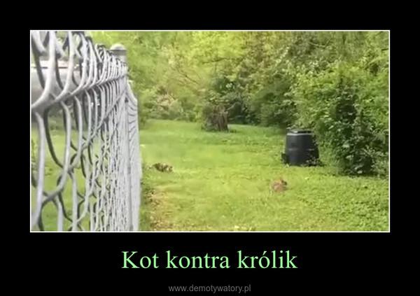 Kot kontra królik –