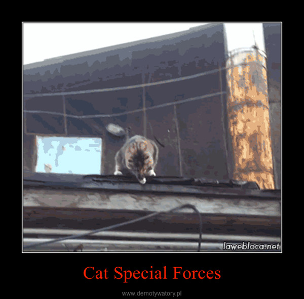 Cat Special Forces –