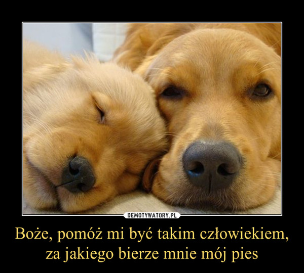 Boże, pomóż mi być takim człowiekiem, za jakiego bierze mnie mój pies –