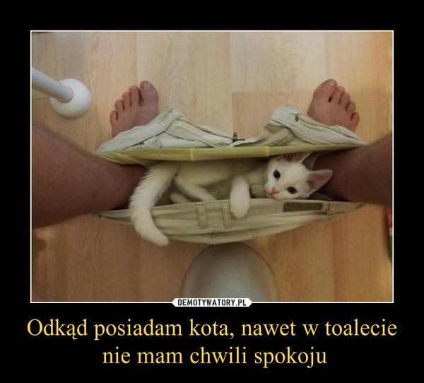 Odkąd posiadam kota, nawet w toalecie nie mam chwili spokoju –