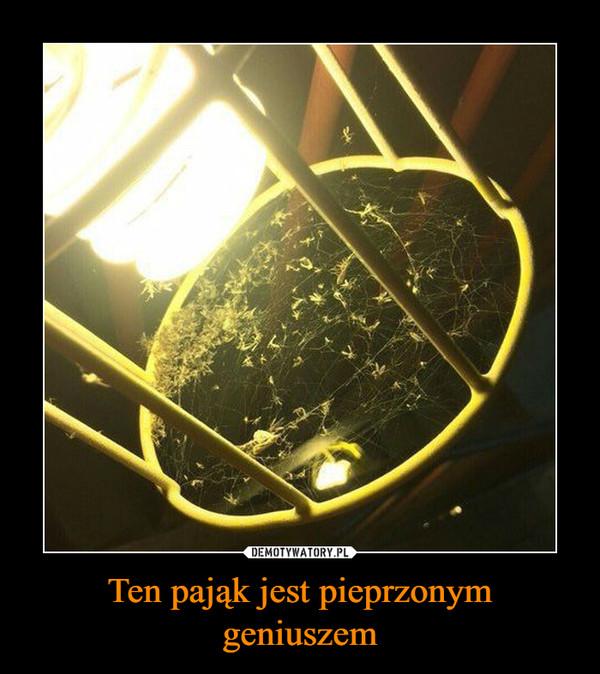 Ten pająk jest pieprzonym geniuszem –