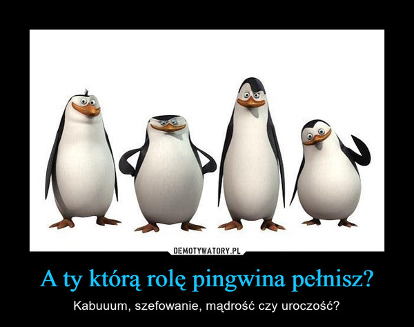 A ty którą rolę pingwina pełnisz? – Kabuuum, szefowanie, mądrość czy uroczość?