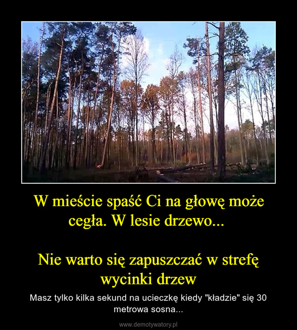 """W mieście spaść Ci na głowę może cegła. W lesie drzewo... Nie warto się zapuszczać w strefę wycinki drzew – Masz tylko kilka sekund na ucieczkę kiedy """"kładzie"""" się 30 metrowa sosna..."""