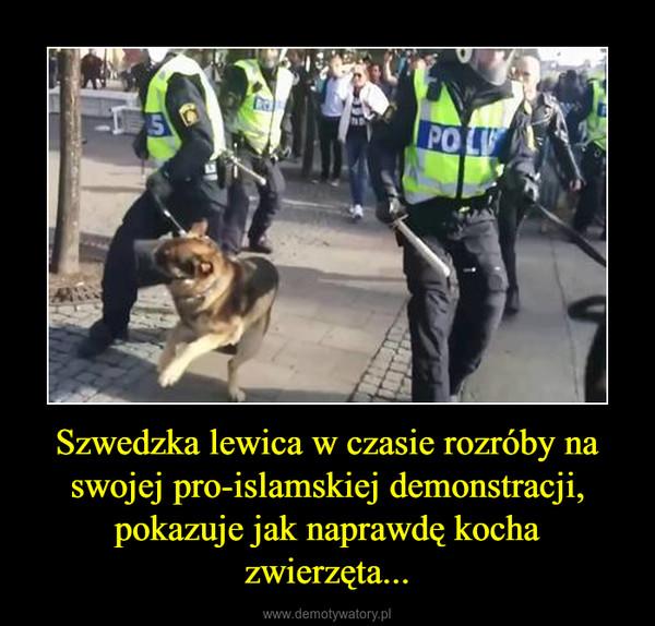 Szwedzka lewica w czasie rozróby na swojej pro-islamskiej demonstracji, pokazuje jak naprawdę kocha zwierzęta... –