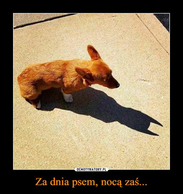 Za dnia psem, nocą zaś... –