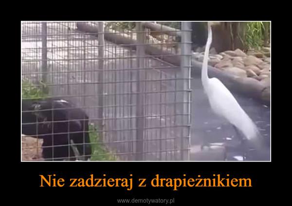 Nie zadzieraj z drapieżnikiem –