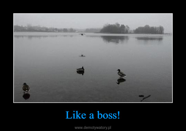 Like a boss! –