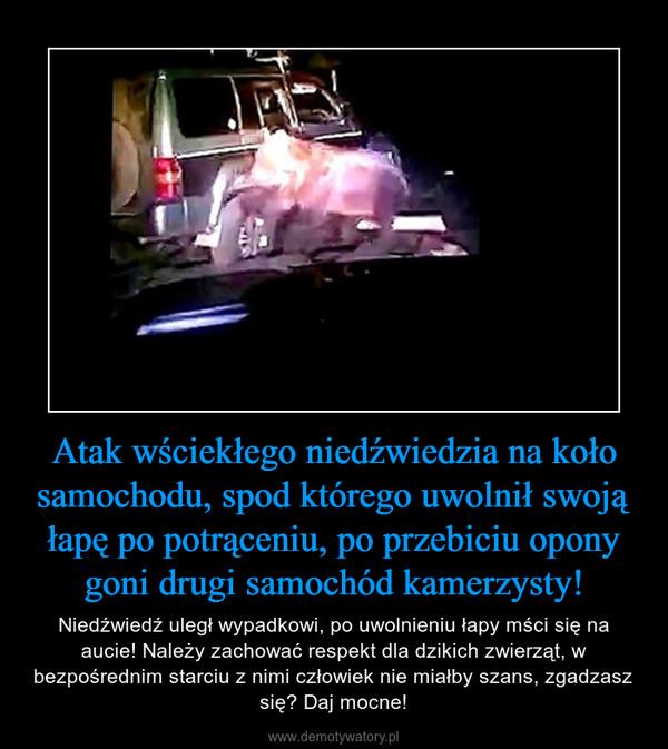 Atak wściekłego niedźwiedzia na koło samochodu, spod którego uwolnił swoją łapę po potrąceniu, po przebiciu opony goni drugi samochód kamerzysty! – Niedźwiedź uległ wypadkowi, po uwolnieniu łapy mści się na aucie! Należy zachować respekt dla dzikich zwierząt, w bezpośrednim starciu z nimi człowiek nie miałby szans, zgadzasz się? Daj mocne!