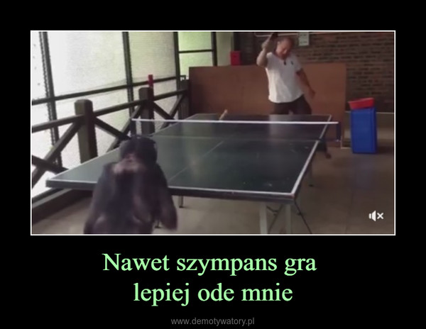 Nawet szympans gra lepiej ode mnie –