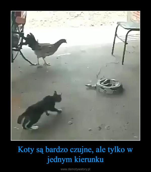 Koty są bardzo czujne, ale tylko w jednym kierunku –
