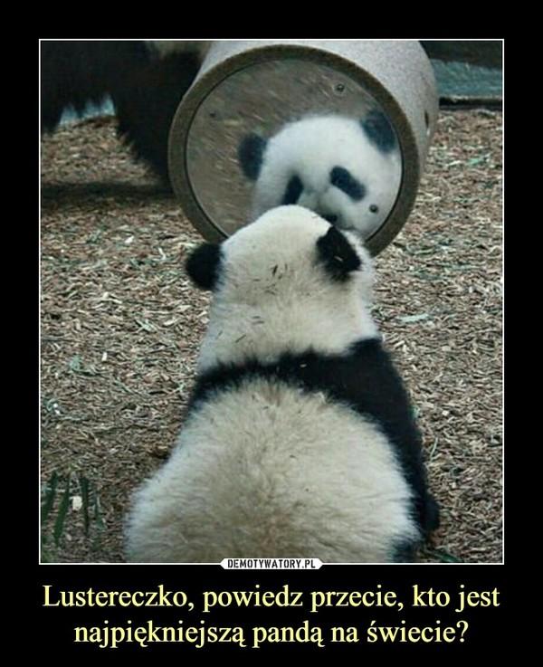 Lustereczko, powiedz przecie, kto jest najpiękniejszą pandą na świecie? –
