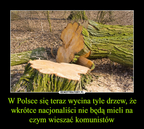 W Polsce się teraz wycina tyle drzew, że wkrótce nacjonaliści nie będą mieli na czym wieszać komunistów –