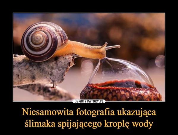 Niesamowita fotografia ukazująca ślimaka spijającego kroplę wody –