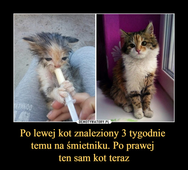 Po lewej kot znaleziony 3 tygodnie temu na śmietniku. Po prawej ten sam kot teraz –