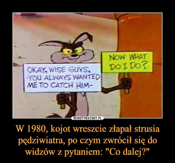 "W 1980, kojot wreszcie złapał strusia pędziwiatra, po czym zwrócił się do widzów z pytaniem: ""Co dalej?"" –  OKAY, WISE GUYS,YOU ALWAYS WANTEDME TO CATCH HIMNOW WHAT DO I DO?"