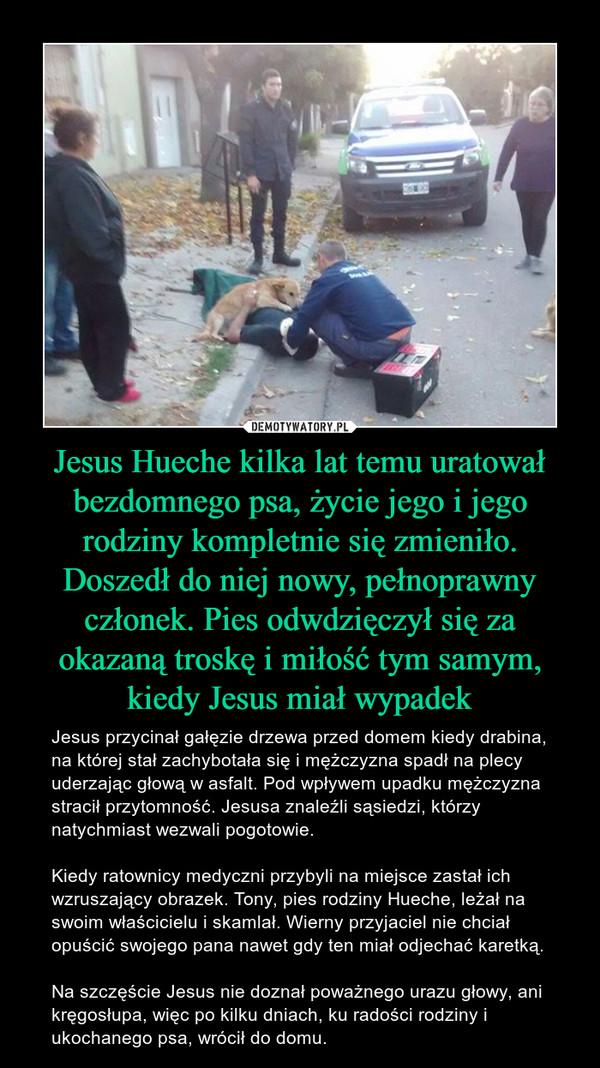 Jesus Hueche kilka lat temu uratował bezdomnego psa, życie jego i jego rodziny kompletnie się zmieniło. Doszedł do niej nowy, pełnoprawny członek. Pies odwdzięczył się za okazaną troskę i miłość tym samym, kiedy Jesus miał wypadek – Jesus przycinał gałęzie drzewa przed domem kiedy drabina, na której stał zachybotała się i mężczyzna spadł na plecy uderzając głową w asfalt. Pod wpływem upadku mężczyzna stracił przytomność. Jesusa znaleźli sąsiedzi, którzy natychmiast wezwali pogotowie.Kiedy ratownicy medyczni przybyli na miejsce zastał ich wzruszający obrazek. Tony, pies rodziny Hueche, leżał na swoim właścicielu i skamlał. Wierny przyjaciel nie chciał opuścić swojego pana nawet gdy ten miał odjechać karetką.Na szczęście Jesus nie doznał poważnego urazu głowy, ani kręgosłupa, więc po kilku dniach, ku radości rodziny i ukochanego psa, wrócił do domu.