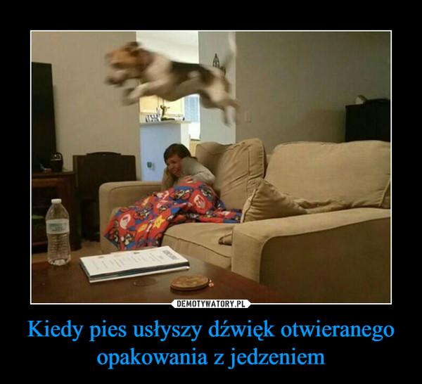 Kiedy pies usłyszy dźwięk otwieranego opakowania z jedzeniem –