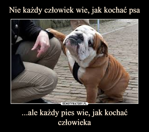 ...ale każdy pies wie, jak kochać człowieka –