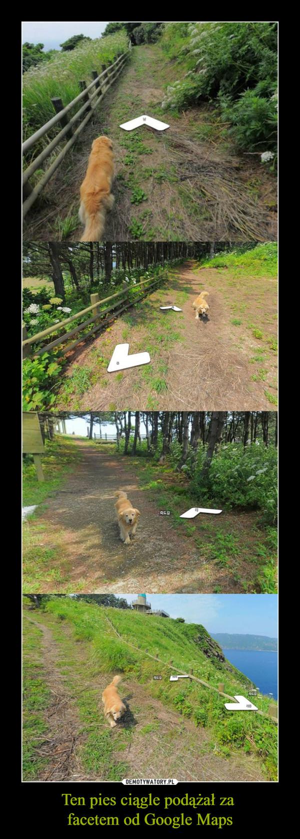 Ten pies ciągle podążał za facetem od Google Maps –