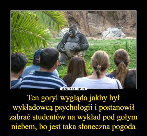 Ten goryl wygląda jakby był wykładowcą psychologii i postanowił zabrać studentów na wykład pod gołym niebem, bo jest taka słoneczna pogoda –