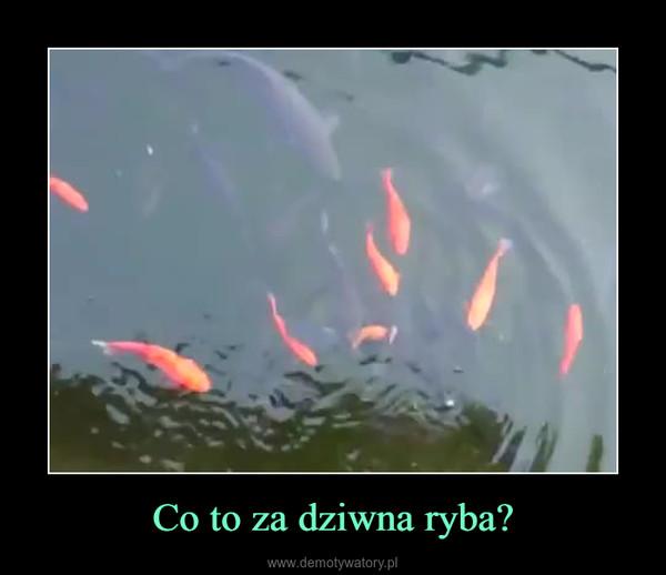 Co to za dziwna ryba? –