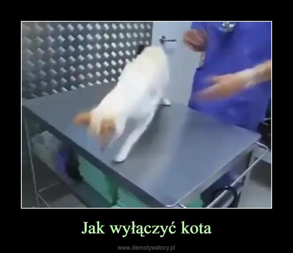 Jak wyłączyć kota –